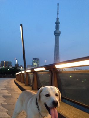 with dog  隅田川テラスからスカイツリーへ♪_a0165160_54417.jpg