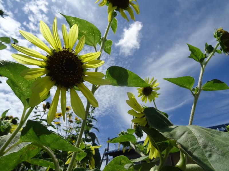真夏日は休養日が増える_c0108460_16243561.jpg