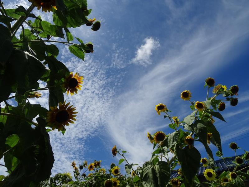 真夏日は休養日が増える_c0108460_16243725.jpg