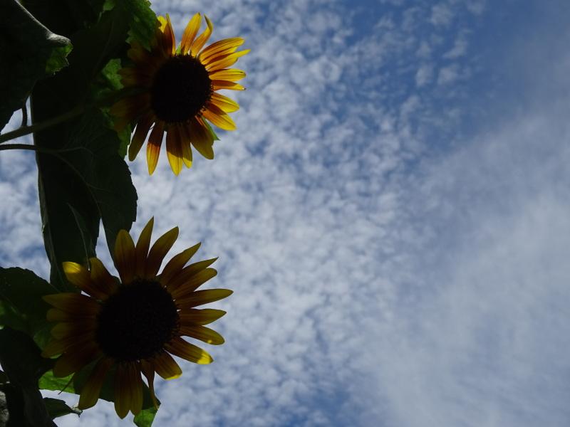 真夏日は休養日が増える_c0108460_16243812.jpg