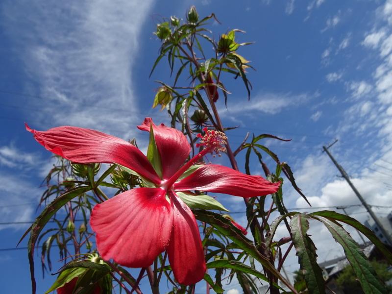 真夏日は休養日が増える_c0108460_16244007.jpg