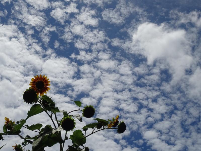 真夏日は休養日が増える_c0108460_16244219.jpg