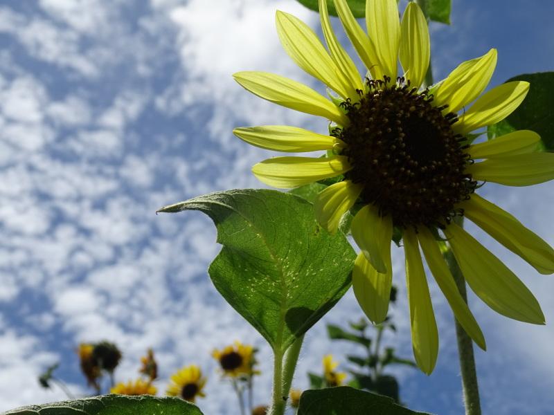 真夏日は休養日が増える_c0108460_16244321.jpg