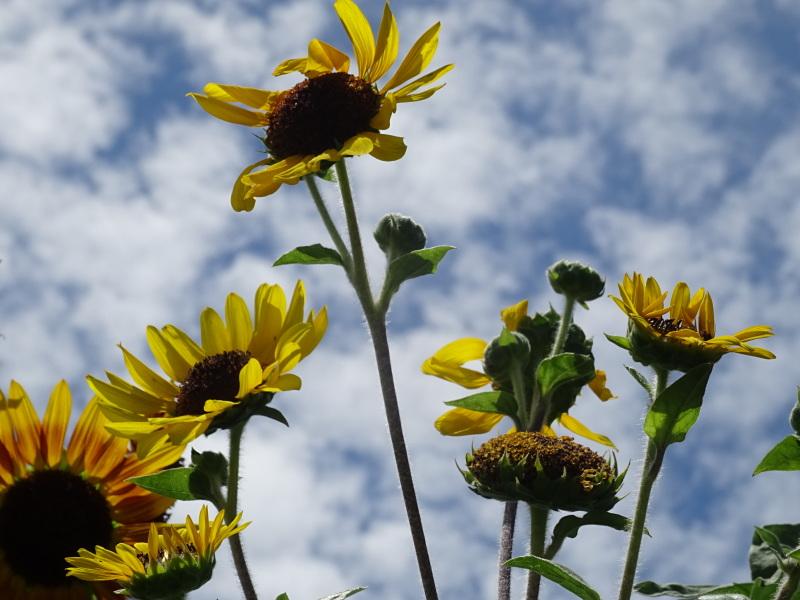 真夏日は休養日が増える_c0108460_16244463.jpg