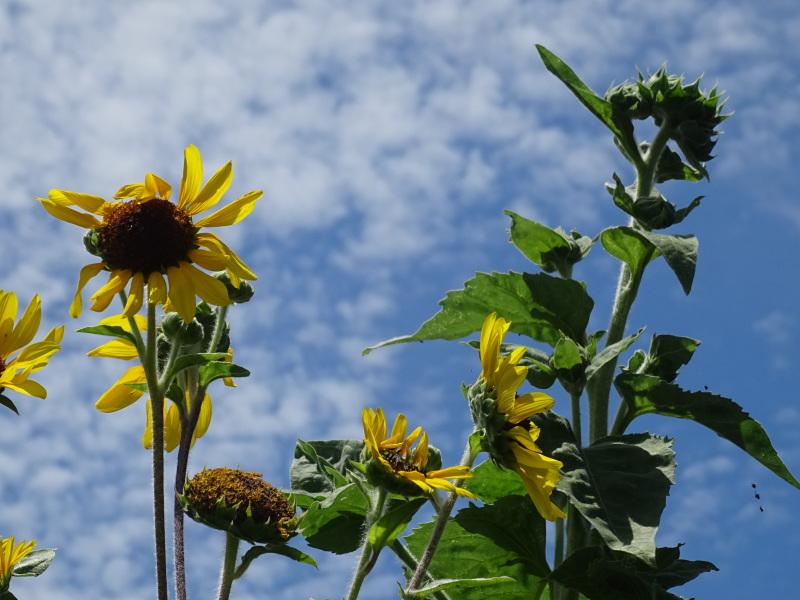 真夏日は休養日が増える_c0108460_16244592.jpg