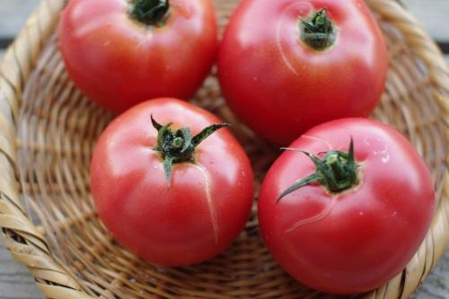 訳ありトマト(加工用トマト)の追加ご注文、受付中です。_c0110869_603543.jpg