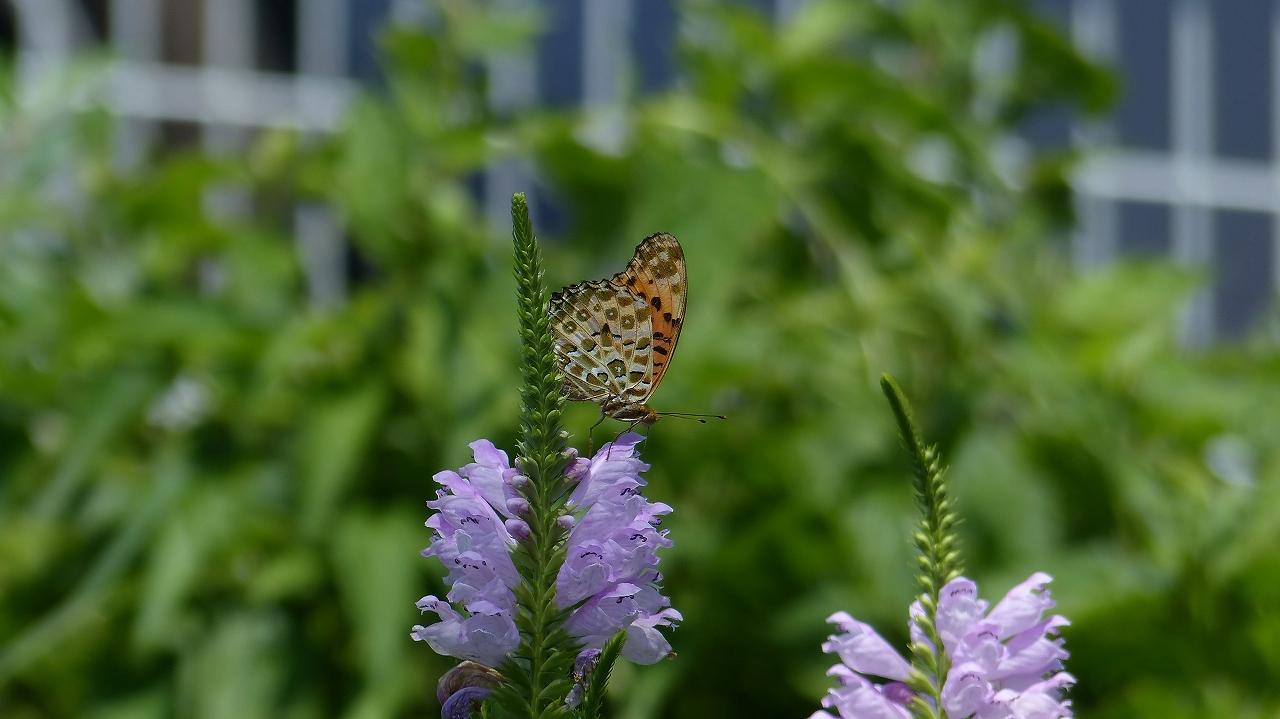 夏だ!暑いぞ! 昆虫だ!_a0185081_1162251.jpg