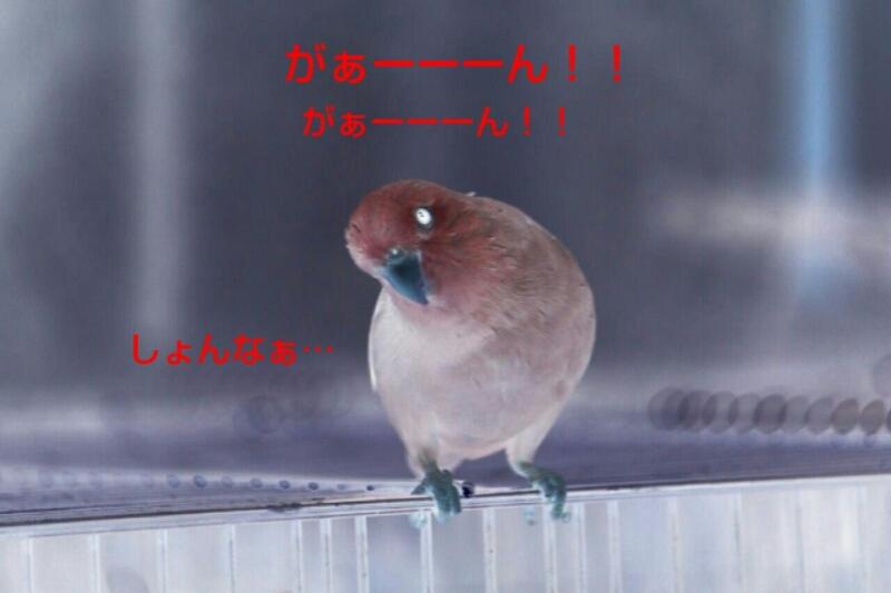 b0062090_21465822.jpg
