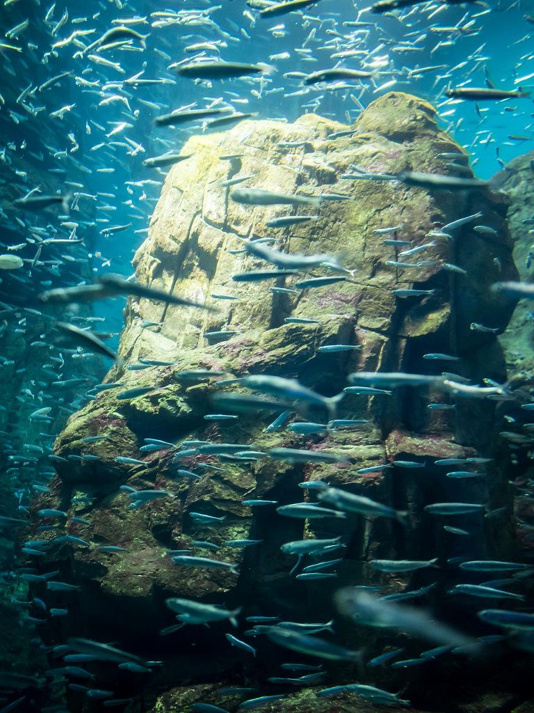 「真夏の水族館 #2」_a0133692_15501038.jpg