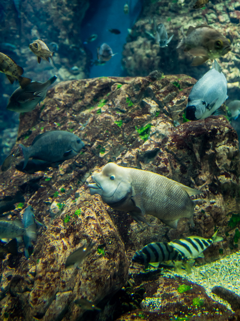 「真夏の水族館 #2」_a0133692_1612567.jpg