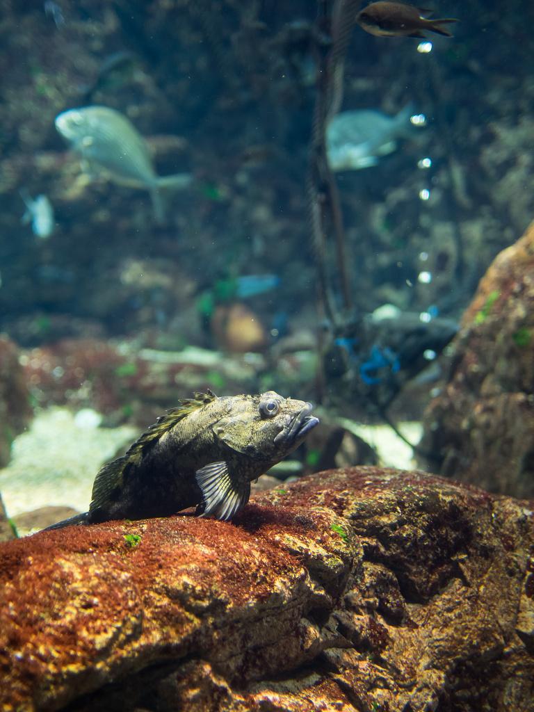 「真夏の水族館 #2」_a0133692_16144424.jpg
