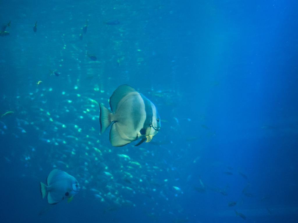 「真夏の水族館 #2」_a0133692_16182738.jpg