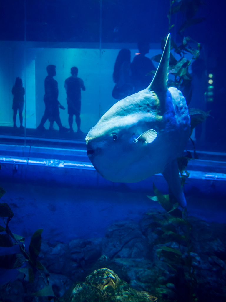 「真夏の水族館 #2」_a0133692_1641075.jpg