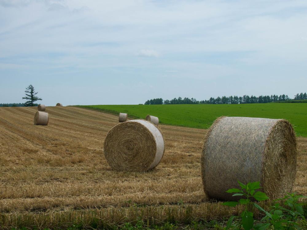今年は丘の上の良い場所に小麦ロールのオブジェ?_f0276498_22300562.jpg