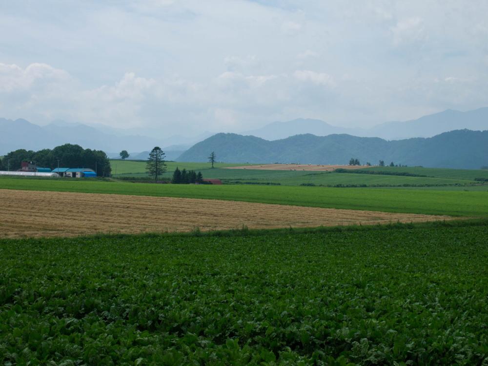 今年は丘の上の良い場所に小麦ロールのオブジェ?_f0276498_22301921.jpg