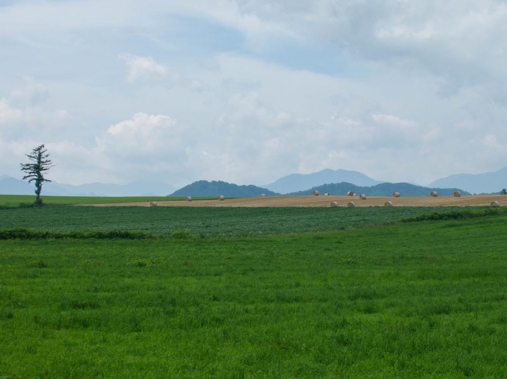 今年は丘の上の良い場所に小麦ロールのオブジェ?_f0276498_22305188.jpg