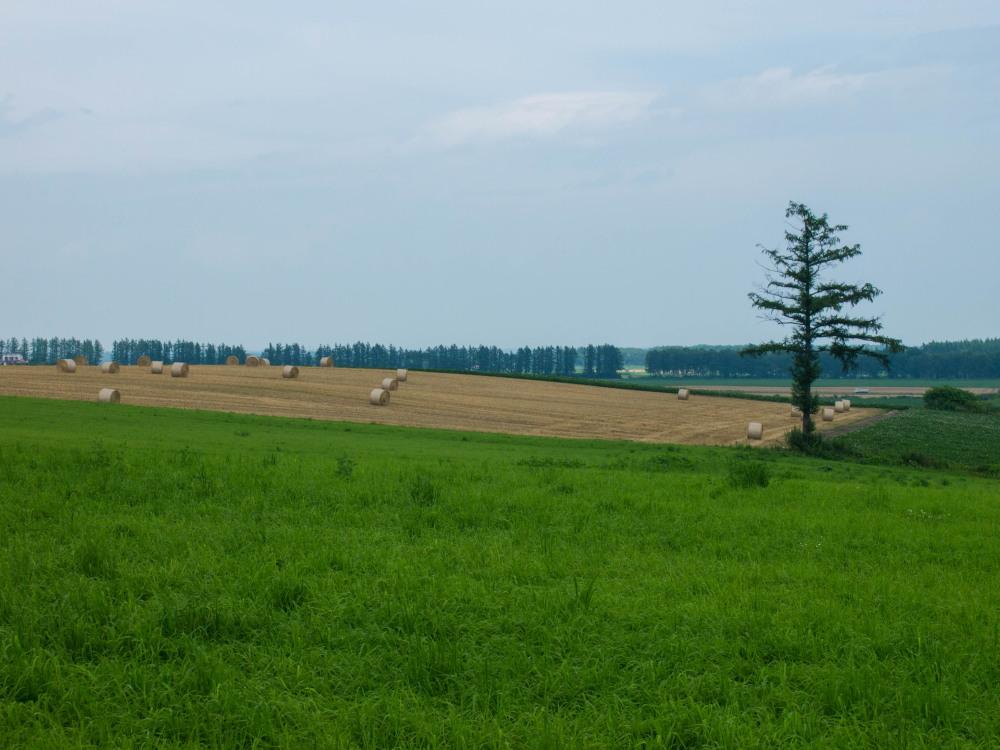 今年は丘の上の良い場所に小麦ロールのオブジェ?_f0276498_22310901.jpg