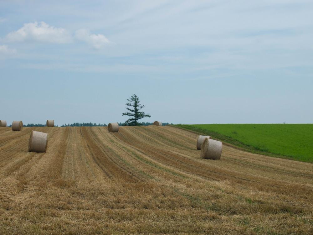 今年は丘の上の良い場所に小麦ロールのオブジェ?_f0276498_22312897.jpg