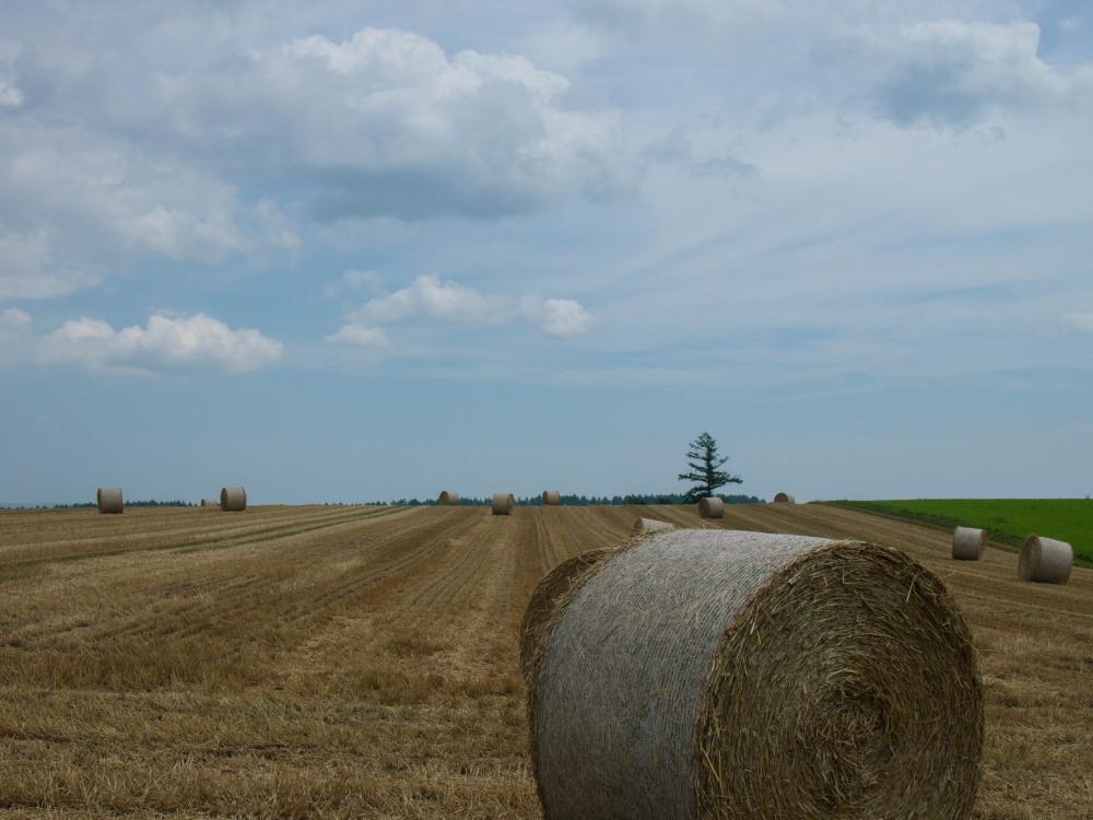 今年は丘の上の良い場所に小麦ロールのオブジェ?_f0276498_22314432.jpg
