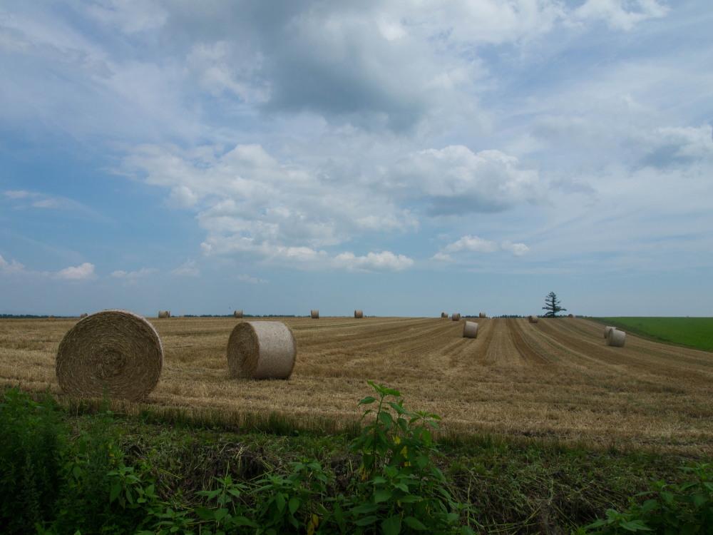 今年は丘の上の良い場所に小麦ロールのオブジェ?_f0276498_22315991.jpg