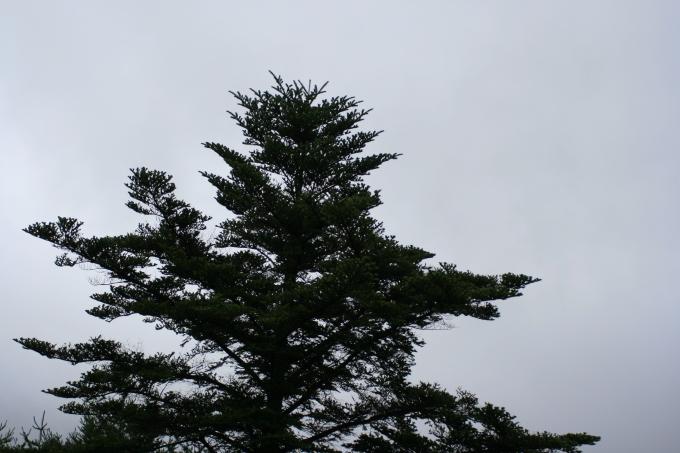 風雨_e0179508_10595616.jpg