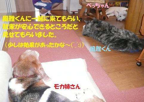 f0121712_424077.jpg
