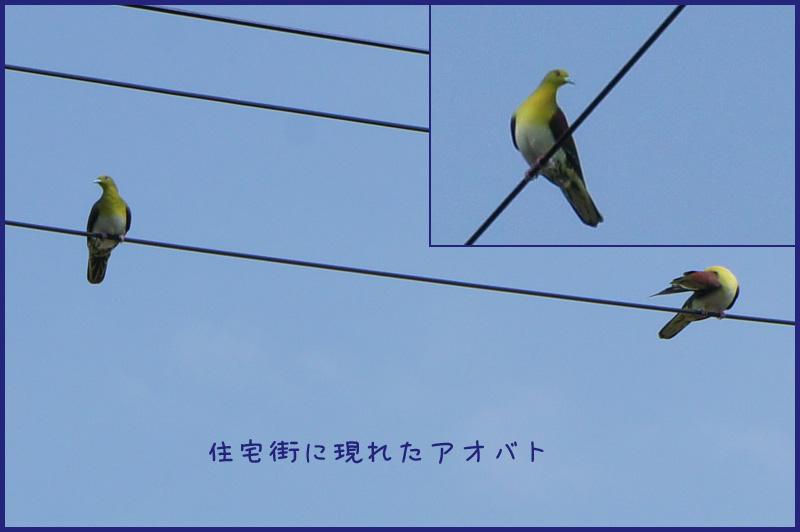 b0019313_1755369.jpg