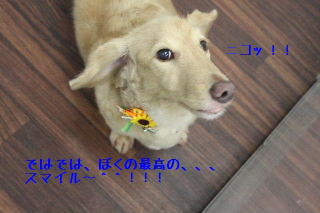 b0130018_17174943.jpg