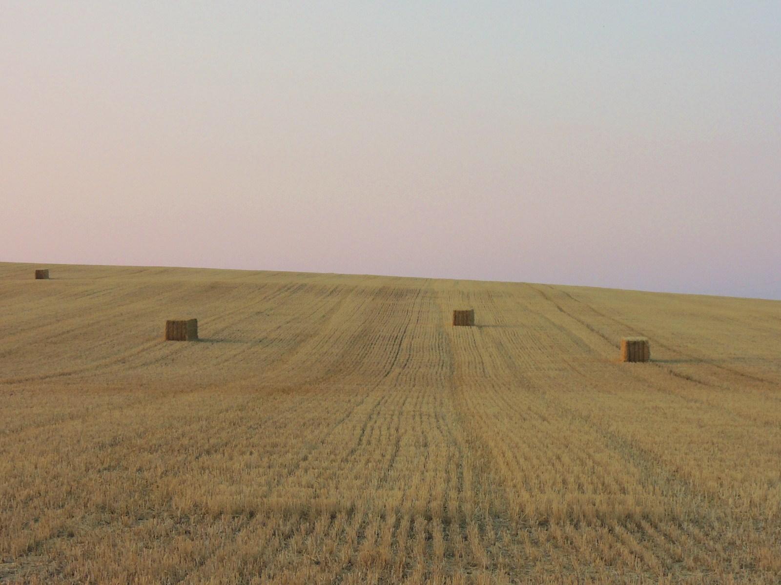 麦畑と渡り鳥_c0213220_5471662.jpg