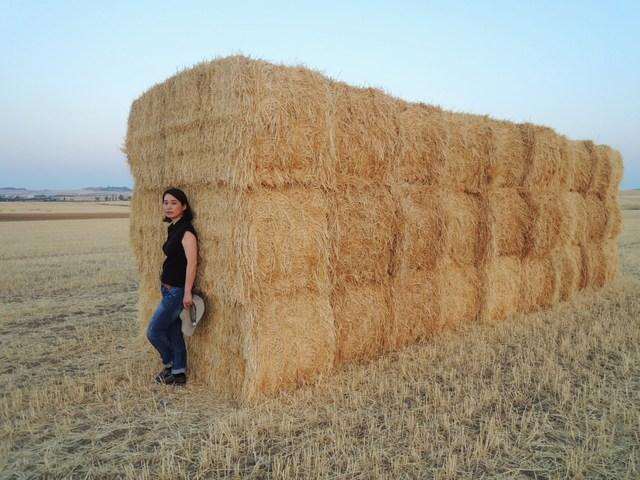 麦畑と渡り鳥_c0213220_5531049.jpg
