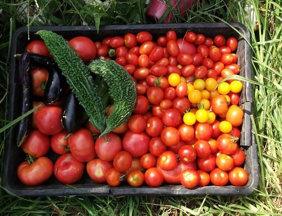 トマト祭りです。_b0137932_14495586.jpg