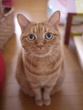 ちゃっこいしましま猫 しぇる編。_a0143140_1831045.jpg
