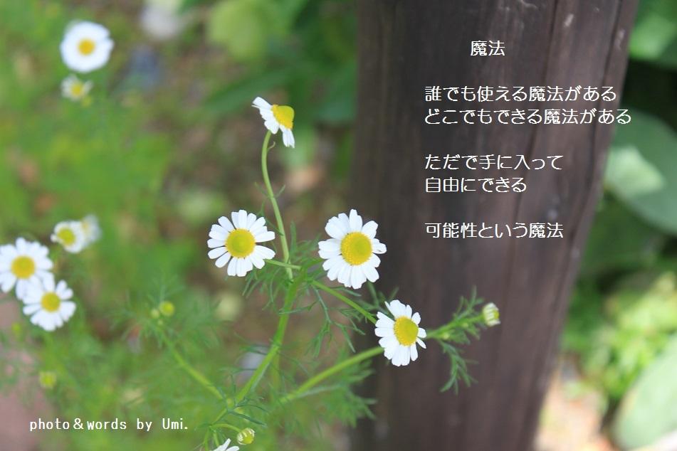 f0351844_09201203.jpg