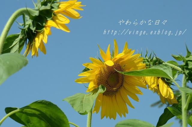 a0158478_14224655.jpg