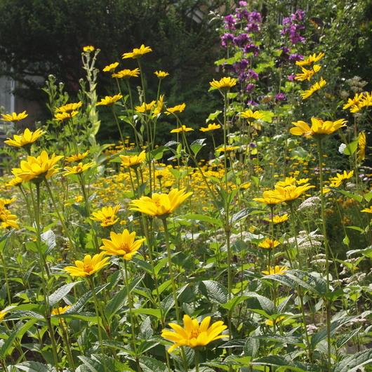 真夏のお庭は黄色い_a0292194_18224937.jpg