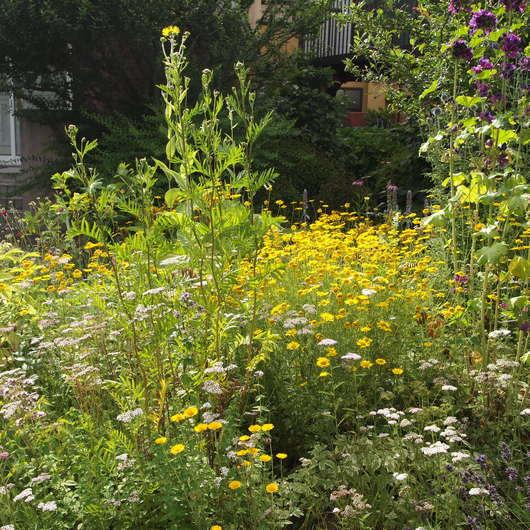 真夏のお庭は黄色い_a0292194_18234137.jpg