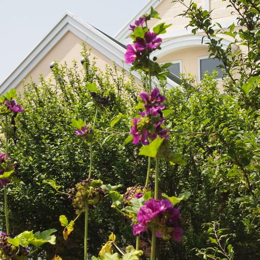 真夏のお庭は黄色い_a0292194_18264799.jpg