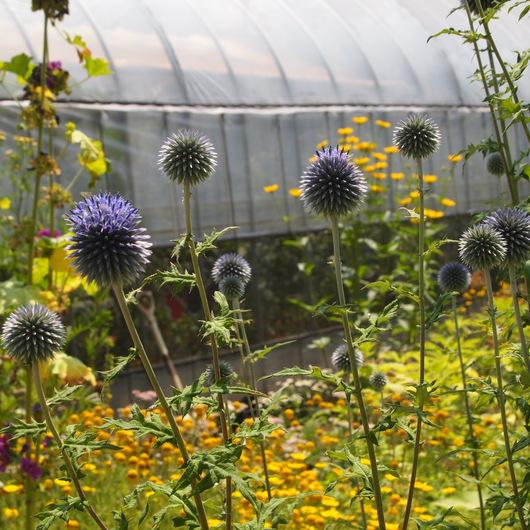 真夏のお庭は黄色い_a0292194_18291263.jpg
