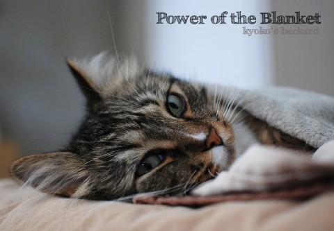 猫も勝てない毛布の威力_b0253205_2255638.jpg
