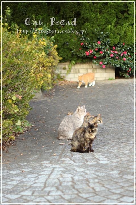 あちこちからネコがゾロゾロと…ねこの集会では一体なにを話合っているの!?