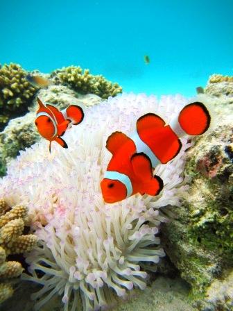 サンゴはアートやぁ~_a0189838_2092428.jpg
