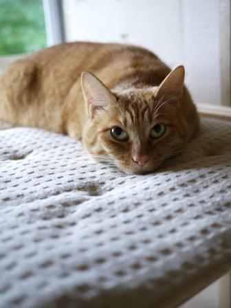 猫のお友だち ミミ子ちゃんソラ男くん編。_a0143140_21104266.jpg