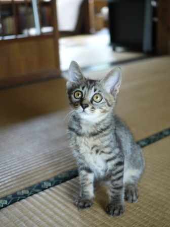 猫のお友だち ミミ子ちゃんソラ男くん編。_a0143140_215289.jpg