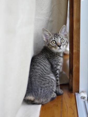 猫のお友だち ミミ子ちゃんソラ男くん編。_a0143140_2161790.jpg