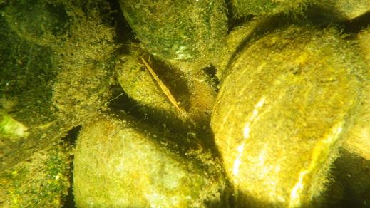 8月2日のきぬたまあそび村 多摩川で川遊び_c0120851_2332973.jpg