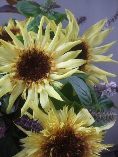 オークリーフ(秋色紫陽花と季節の花のアレンジメント)_f0049672_15312130.jpg