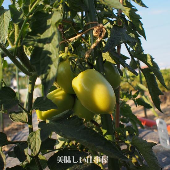 トマトソースを作ります。。。。_e0065906_16273637.jpg