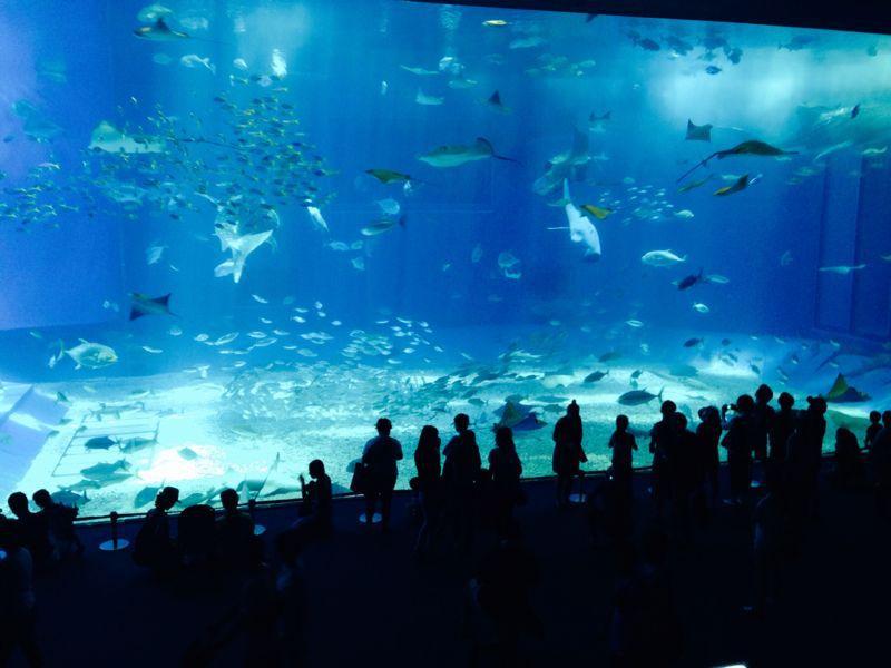 沖縄旅行_e0253026_12303215.jpg