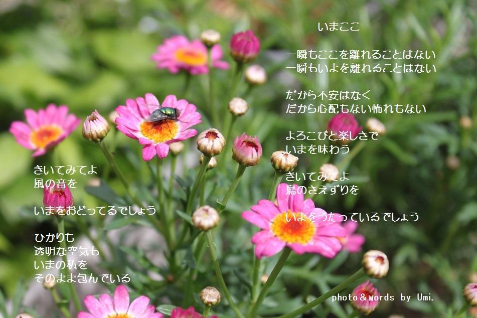 f0351844_10305041.jpg