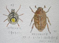 『 昆虫・蜘蛛 スケッチ  』_a0083553_915962.jpg